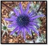 Pollinator Garden Flower