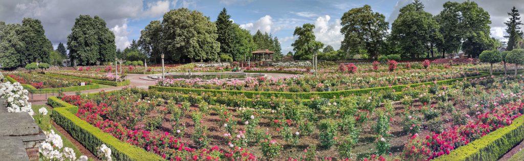 Panoramic Image of Peninsula Park Rose Garden in Portland, Oregon